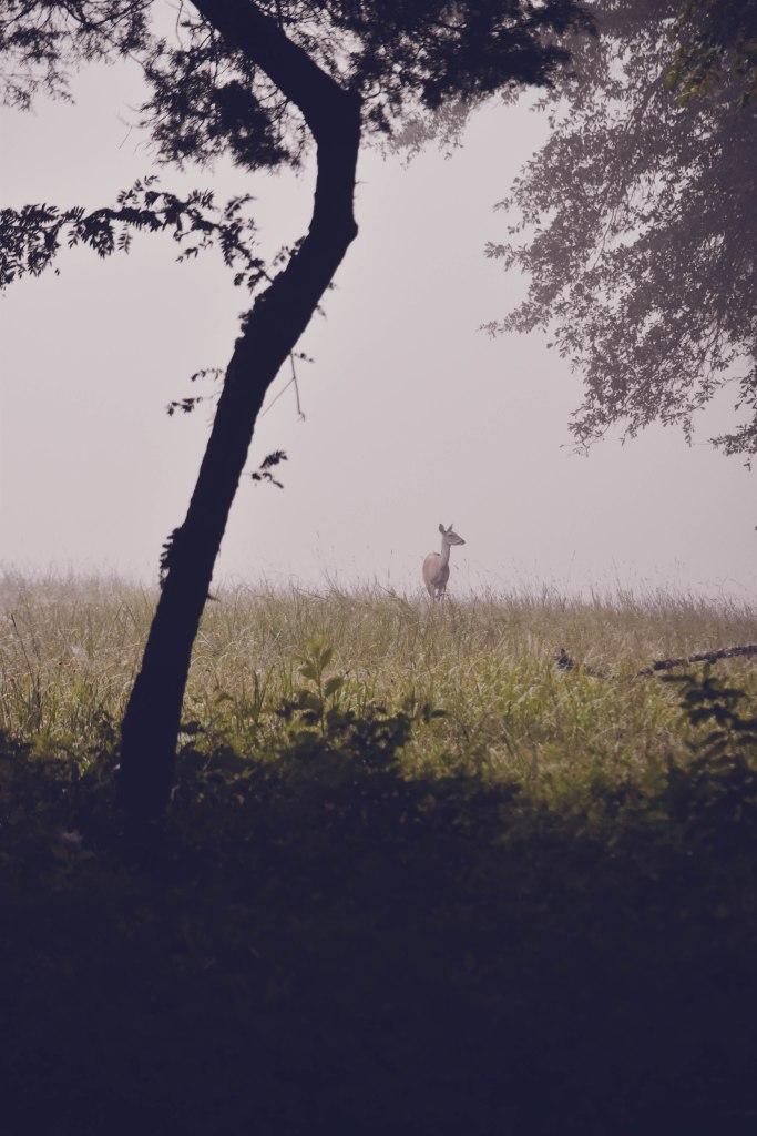 Chickamauga Battlefield, Chickamauga, GA by Hannah Stuart, 2017